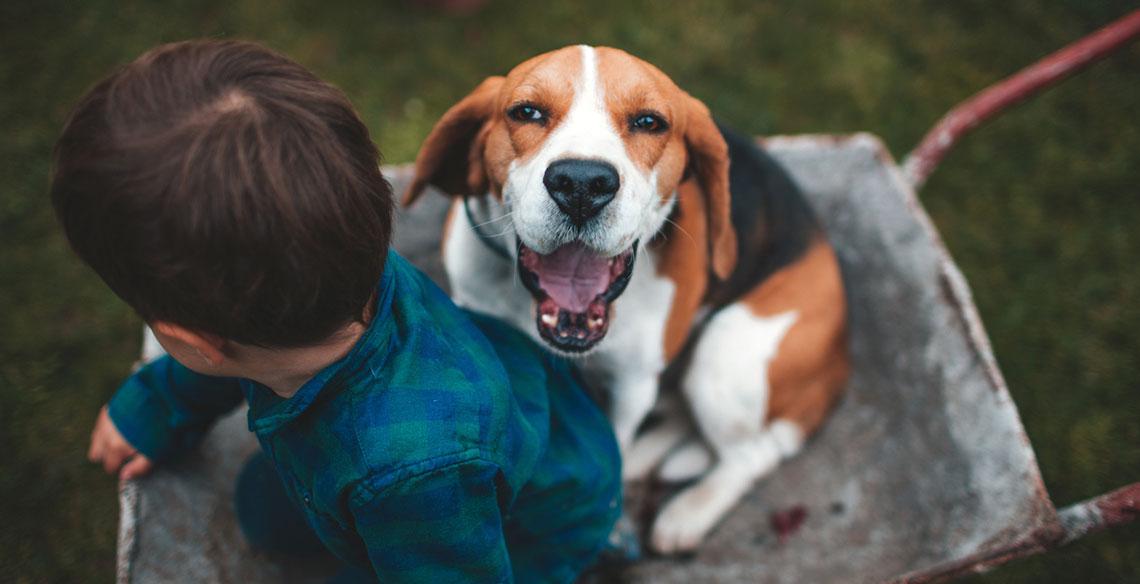 cachorro-de-estimação